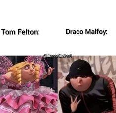 Memes Do Harry Potter, Mundo Harry Potter, Harry Potter Feels, Harry Potter Pictures, Harry Potter Cast, Harry Potter Fandom, Harry Potter World, Tom Felton Harry Potter, Magia Harry Potter