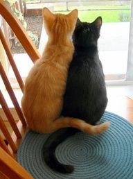 Orange tabby, black cats ... almost like Perk and Teeny