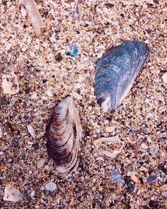 "superKinder 🇷🇴🇬🇧 on Instagram: ""🌊🐚🌊🐚🌊 #seaside #shells #beach #sand #lovely #summer #instasummer #july #sunny #instasea #blacksea #europe #romania #litoralulromânesc…"" Black Sea, Romania, Seaside, Sunnies, Shells, Europe, Beach, Summer, Instagram"