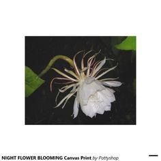 NIGHT FLOWER BLOOMING Canvas Print