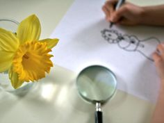 » Observing and Drawing Daffodils