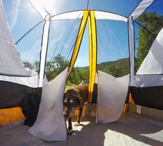 . . .  Oh hello.  It's me again.  Are you awake yet?  Fetch?  Swim?  Fetch?  I haz energy.  Fetch?  Are you awake yet?   #campingwithdogs Re-post by Hold With Hope