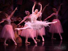 Margaret Severin-Hansen as 'Dewdrop' from Ballet Hawaii's Nutcracker - Photo by Joe Marquez