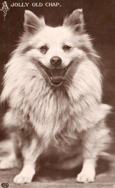 "1911 British EAS Photo Postcard Dog ""Jolly Old Chap"" | eBay"