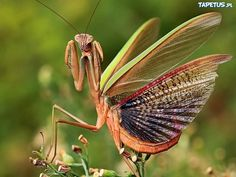 creepy insects - Google Search