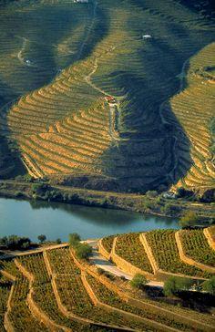 Vietnam Or Portugal? Douro River banks planted with Port wine vineyards ' Portugal Douro Portugal, Visit Portugal, Spain And Portugal, Portugal Travel, Places To Travel, Places To Visit, Magic Places, Douro Valley, In Vino Veritas
