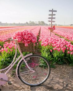 """Kayla on Instagram: """"Happy Monday you guys! Yesterday we went to a tulip farm to get our family photos made and it was absolutely beautiful and I can't wait to…"""" Spring Aesthetic, Nature Aesthetic, Flower Aesthetic, Beautiful Flowers, Beautiful Places, Beautiful Pictures, Beautiful Gorgeous, Tulip Season, Tulip Fields"""