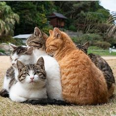 Any cats and kitten that are cute. See more ideas about Cute cats, Cute kittens Tags: Cute Cats And Kittens, I Love Cats, Cool Cats, Kittens Cutest, Crazy Cats, Pretty Cats, Beautiful Cats, Animals Beautiful, Cute Funny Animals
