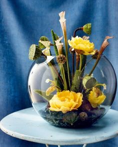 Fishbowl Garden How-To: 1. Fit the bottom of a fishbowl w/ large round floral frog & surround w/ base of echeveria; 2. Add aeonium rosettes; 3. Pour in water to a depth of 2 inches; 4. Place 2 or 3 short tree-peony & paphiopedilum blossoms around the perimeter; 5. Cut ferns & stems of lotus pods to varying lengths, & insert them in frog, rotating bowl to check balance; 6. Add scabiosa seed heads & pitcher plant flowers; 7. Finish w/ one tall tree peony.