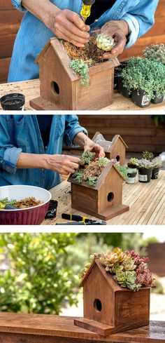 This pine wood Birdhouse has a plantable roof which is a cute way to display your succulents. Plant a mix of hardy succulents, hens & chicks, sedum Succulent Planter Diy, Diy Planters, Succulents Garden, Planting Flowers, Homemade Bird Houses, Bird Houses Diy, Decorative Bird Houses, Backyard Projects, Garden Projects