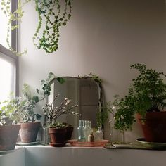 plants and glass bottles in front of mirror