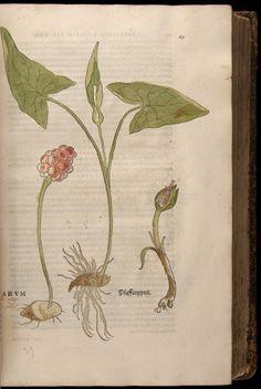 Image of Fuchs-1542-069