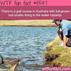 Golf course in Australia with sharks - WTF fun facts<---there was a storm and it flooded all the way to the golf course and it dumped the sharks there and there are shark water hazards signs. Learned this in an Uncle John Bathroom Reader book Wow Facts, Wtf Fun Facts, True Facts, Funny Facts, Random Facts, Crazy Facts, Random Stuff, The More You Know, Did You Know