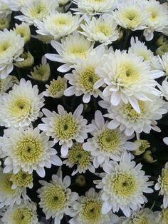 #Wallpaper #flower