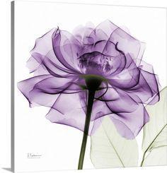 Purple Rose X-Ray Photograph