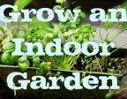 My Apartment Garden: How to Grow an Indoor Herb or Vegetable Garden