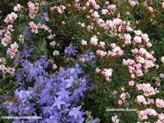 Der Rosenhügel - Meine Homepage