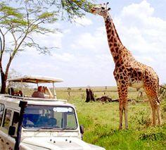 Safari in Africa...oh yeah