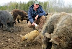 Mark Baker poses with his exotic swine on his farm near McBain, Michigan.  (Source: Associated Press / John Flesher) **** I CALLED, WILL YOU???