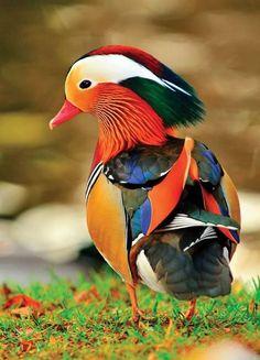 Et si Photoshop existait… dans la vraie vie ? Certains animaux sont si colorés qu'ils n'ont même pas besoin de retouches photo, une fois que c'est dans la boîte. La nature nous offre parfoi...