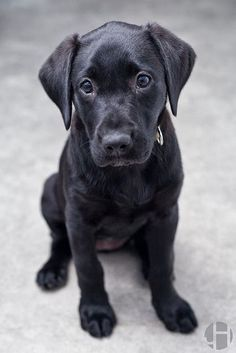 Adopt a black dog! Black dogs are the last to be adopted and the first to be euthanized in shelters