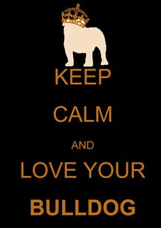 Keep calm bulldog edition