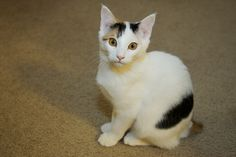 Mochi cutie, pompom tail