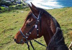 Morgan Bay, The Wild Coast, South Africa. Riding Holiday, Marine Life, Landscape Photography, South Africa, Coast, Horses, Green, Scenery Photography, Landscape Photos