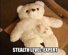 Nobody's Here but Us Teddy Bears - LOLcats is the best place to find and submit funny cat memes and other silly cat materials to share with the world. We find the funny cats that make you LOL so that you don't have to. Funny Animal Pictures, Funny Animals, Cute Animals, Funniest Pictures, Crazy Cat Lady, Crazy Cats, Funny Cute, The Funny, Hilarious