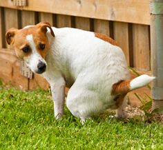 8 Home Remedies for Constipation In Dogs | Q #dogs #constipation #remedies