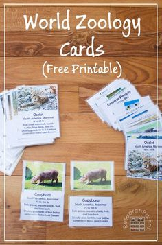 38 best education images on pinterest home school curriculum free printable world zoology cards fandeluxe Image collections