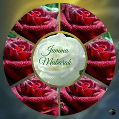 Jummah Mubarak Messages, Jumma Mubarak Quotes, Jumma Mubarak Images, Islamic Images, Islamic Videos, Islamic Pictures, Jumat Mubarak, Ali Quotes, Urdu Quotes