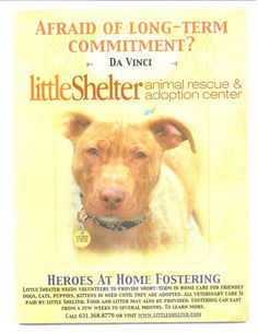 Little Shelter Animal Rescue and Adoption Center. THIS GOES FOR A LOT OF SHELTERS!