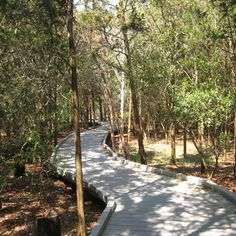 Choose your trail - 1/2 mile walk, 1.5 mile walk or 2 mile walk - easy strolling on boardwalk through wetland marshes, coastal dunes, a freshwater pond and forested habitat filled with red-winged blackbirds and other birds; the rhythmic sound of ocean waves in the background.