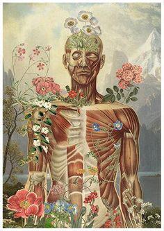 Nature is all around anatomical art anatomy art wall art Art And Illustration, Medical Illustration, Flower Anatomy, Human Anatomy Art, Medical Art, Poster Prints, Art Prints, Human Art, Art Studies