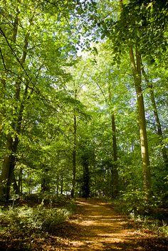 Beautiful woodland walk,Harcourt Arboretum, University of Oxford