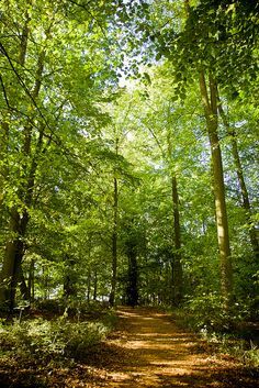 Beautiful woodland walk, Harcourt Arboretum, University of Oxford