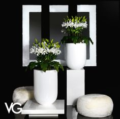 Vegetation Arrangement - #flower #flowers #furniture #furnishings #madeinitaly…