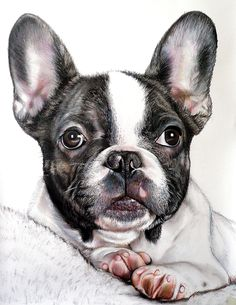 PORTRAITS OF DOGS - Alberto Vittorio Viti All my dogs are made by hand with colored pencils on Fabriano's paper.