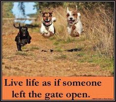 Live as is someone left the gate open. Hoverdogs.
