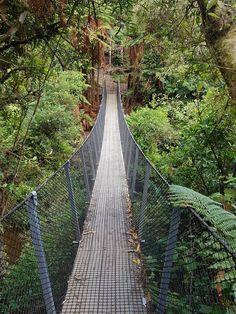 The Sledge Track, Manawatu.