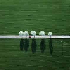 Row of white amid fields of green.