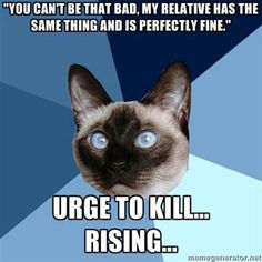 Chronic Illness Cat  A doctor actually said this to me..........I am NOT kidding and she even added  'and SHE went back to work.'  I  could NOT believe my ears