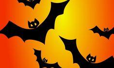 Novo estudo da Universidade de Columbia mostra que morcegos tem uma rede de neurônios sensíveis em suas asas, que os ajudam no voo.