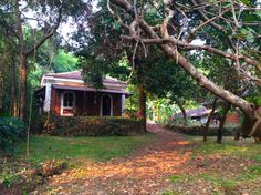 Goa Homestay - The Red House, a quaint old Goan Portugese house, surrounded by a large garden and lovely fields. Situated in Olaulim Village.