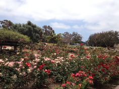 Balboa Park, San Diego.