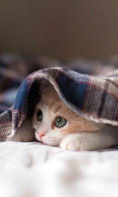 Source: freeandroidwallpaper.com - http://freeandroidwallpaper.com/sleepy-kitten/
