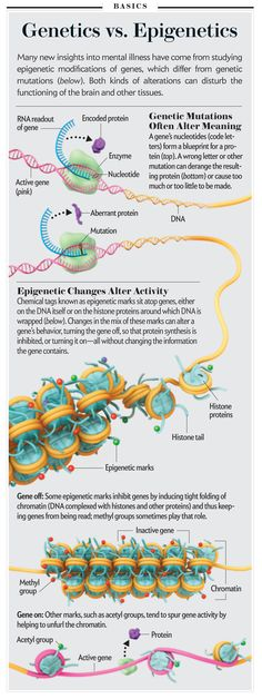 "A nice visual: Genetics vs. Epigenetics [Illustration by AXS Biomedical Animation Studio, for ""Hidden Switches in the Mind,"" by Eric Nestler, Scientific American, December Cell Biology, Molecular Biology, Ap Biology, Teaching Biology, Science Education, Life Science, Science And Nature, Forensic Science, Higher Education"