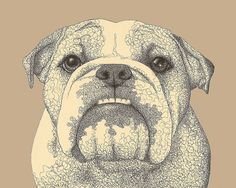 bulldog drawing by erinkejo on Flickr