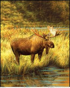 Majestic Outdoors Moose Panel